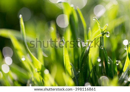 drops of dew on the green grass in nature. macro - stock photo