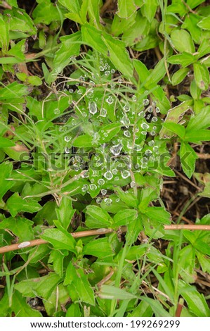 Drops of dew on the spider-web in green field