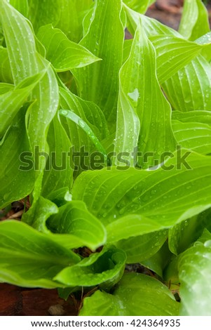 drops of dew on the spring green grass. Close-up. - stock photo