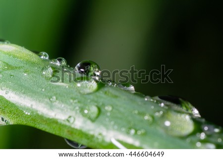 drops of dew slipping from a leaf in the morning