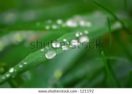 Drops of morning water - stock photo