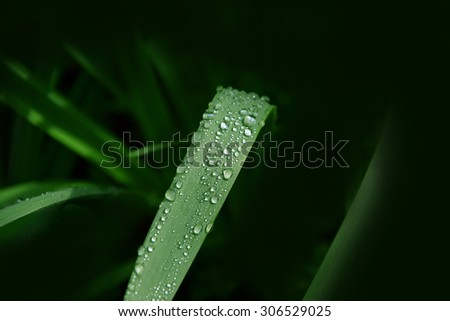 drops of rain on the green leaves  - stock photo