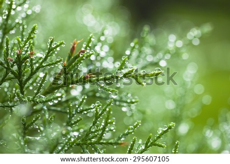 drops of water after raining in the morning - stock photo