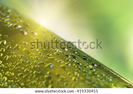 Drops of water on a glass green bottle