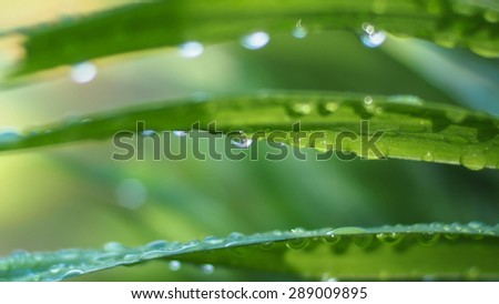 drops of water on l green leaf