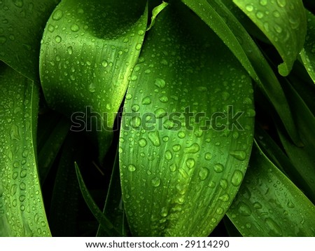 drops of water on leafs - stock photo