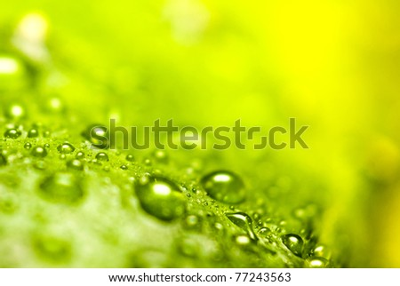 drops on a flower - stock photo