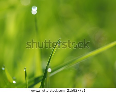 drops on the grass