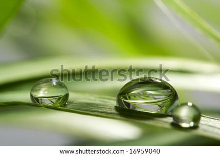 drops with green grass - stock photo