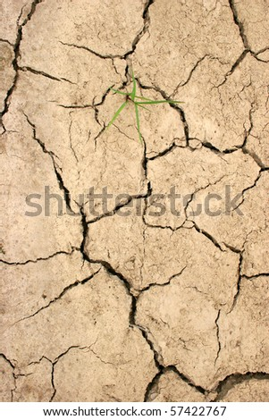 drought caused cracked earth with solitary plant - stock photo