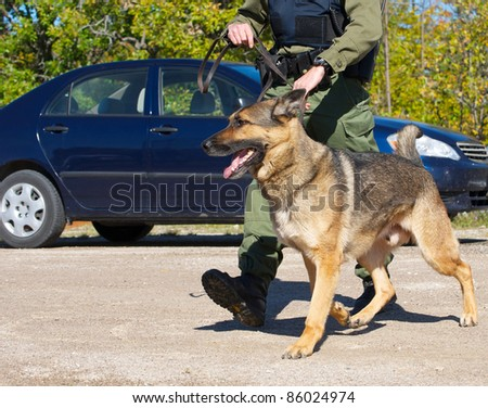 Drug sniffing dog and his uniformed police officer handler preparing to investigate a crime scene.   I have a very similar image in my portfolio which has a police cruiser in it. - stock photo