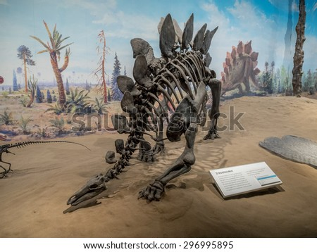 DRUMHELLER, CANADA - JULY 4: Dinosaur fossil exhibit at the V Royal Tyrrell Museum on July 4, 2015 at Drumheller, Alberta. The museum is famous for its palaeontology research and 130,000 fossils. - stock photo