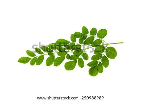 thesis on tinospora cordifolia The anti-tumor activity and chemopreventive potential of four ayurvedic herbs viz curcuma longa l, ocimum sanctum l, tinospora cordifolia (wild) miers ex hookf.