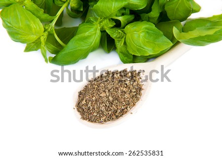 dry and fresh basil on white background - stock photo