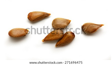 Dry apple seeds on the white background
