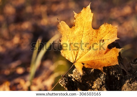 dry autumn leaf in forest - stock photo