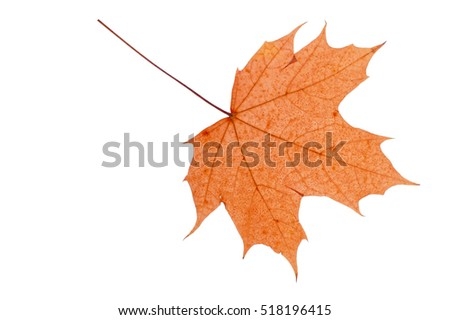 Dry autumn leaf on a white background.