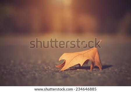 Dry autumn leaf on asphalt - stock photo