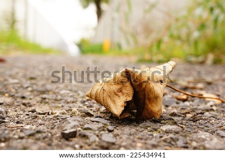 Dry autumn leaf on the ground