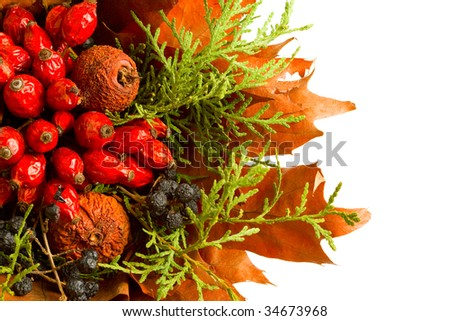 Dry autumn plants and fruits isolated on white