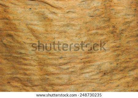 dry banana leaf texture background - stock photo