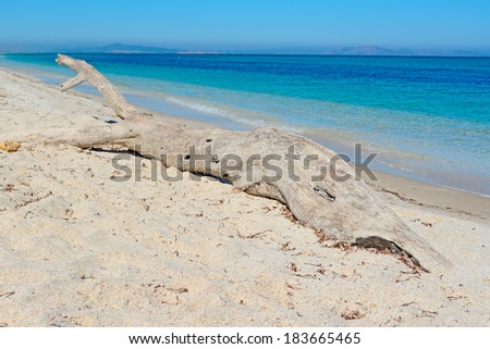 dry branch in Fiume Santo coastline, Sardinia - stock photo