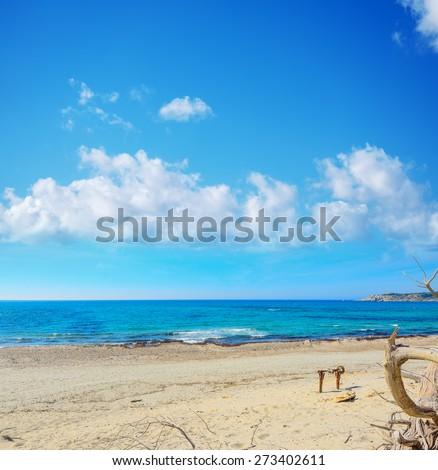 dry branch in Rena Majore beach, Sardinia - stock photo