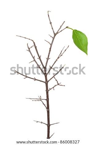 Dry branch with green leaf - stock photo