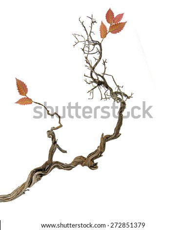 Dry branch with leaves - stock photo