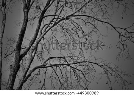 dry branches