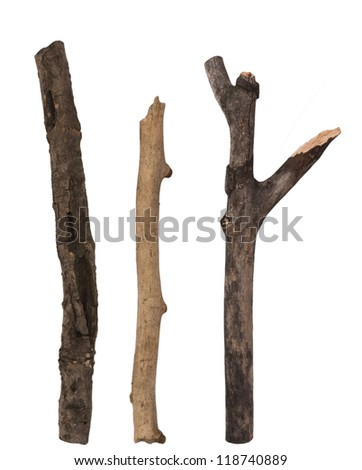 dry branches isolated on the white