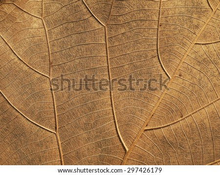 dry brown leaf texture - stock photo