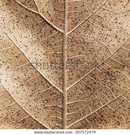 dry brown leaf texture