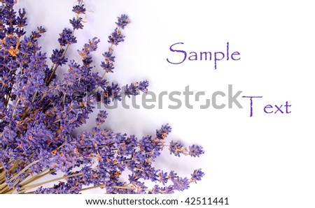 Dry bunch of French lavender. Great for greeting-card. - stock photo