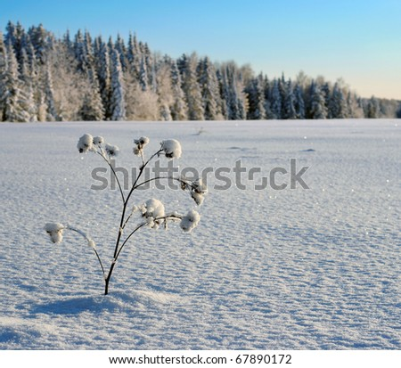 Dry burdock plant covered with hoarfrost in frosty winter day. - stock photo