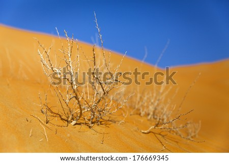 Dry bush in the beautiful Empty Quarter desert in UAE - stock photo