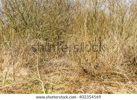 dry bushes and dry yellow grass in autumn or spring / dry brushes at bog and morass near the forest  - stock photo