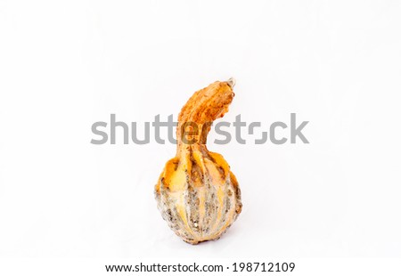 Dry butternut squash isolated on white background