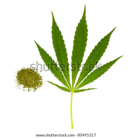 dry cannabis and green leaf - stock photo