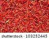 dry chili pepper - stock photo