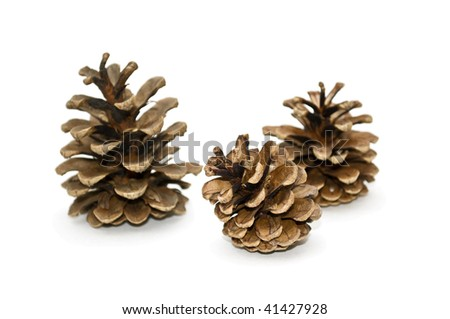 Dry cones of a pine isolated on a white background.