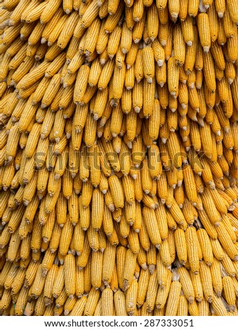 dry corn cobs natural background - stock photo
