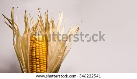 Dry Corn Husks - stock photo