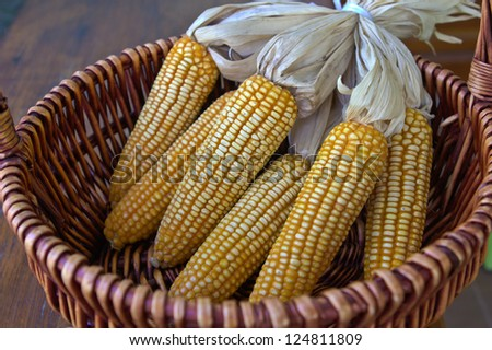 Dry corn seeds in the basket