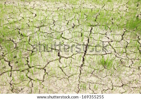 Dry crack earth at rice field - stock photo