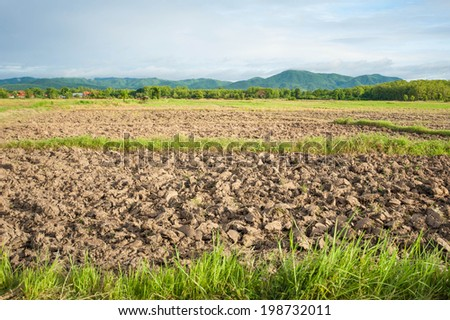 Dry crack earth at rice field background - stock photo