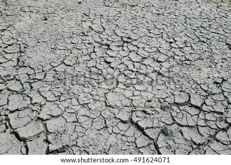 Dry cracked earth in cornfield