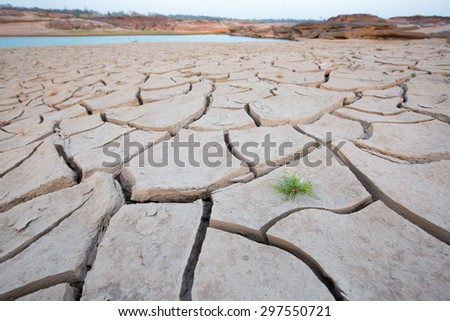 Dry cracked earth with plant struggling for life - stock photo