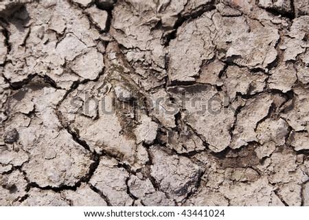 Dry, cracked macro shot of the ground - stock photo