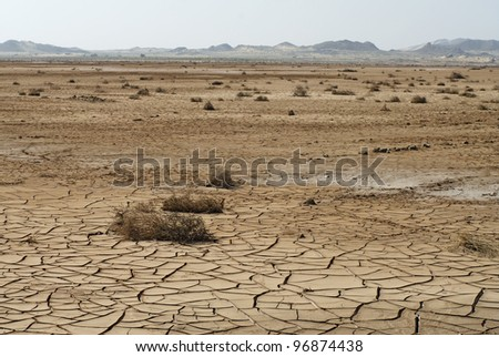 Dry cracked soil and plant in desert - stock photo